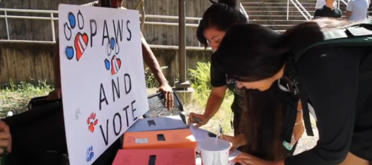 Students at the University of Houston cast their vote in a presidential mock election.